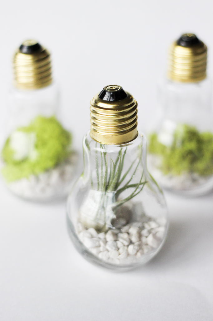 DIY-Lightbulb-Terrarium-cladandcloth.com_-682x1024
